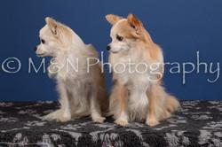 M&N Photography -DSC_5050