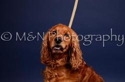 M&N Photography -IMG_4630