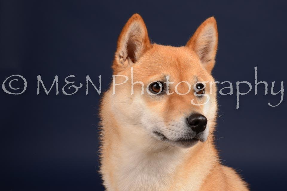 M&N Photography -DSC_0365
