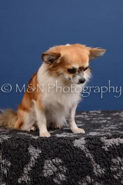M&N Photography -DSC_4981