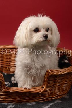 M&N Photography -DSC_6820