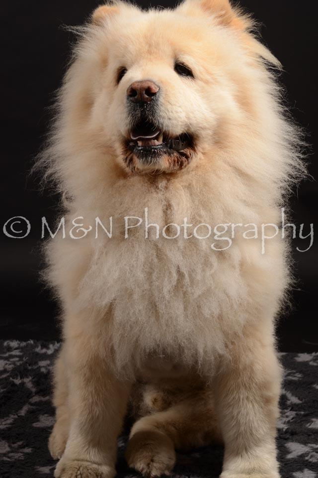 M&N Photography -DSC_9679