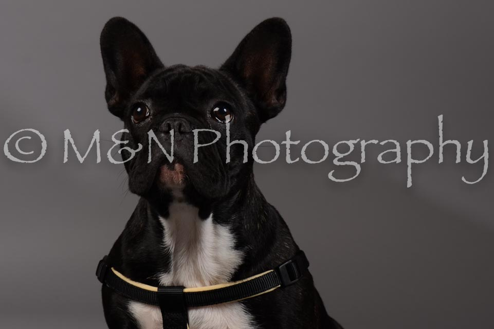 M&N Photography -DSC_1721