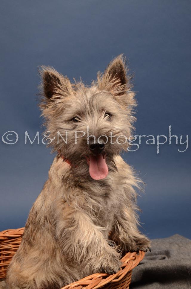M&N Photography -DSC_4241