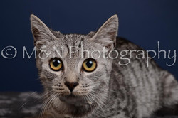 M&N Photography -DSC_4274