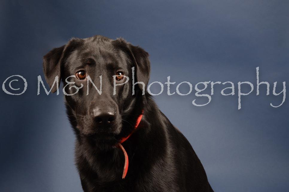 M&N Photography -DSC_4182