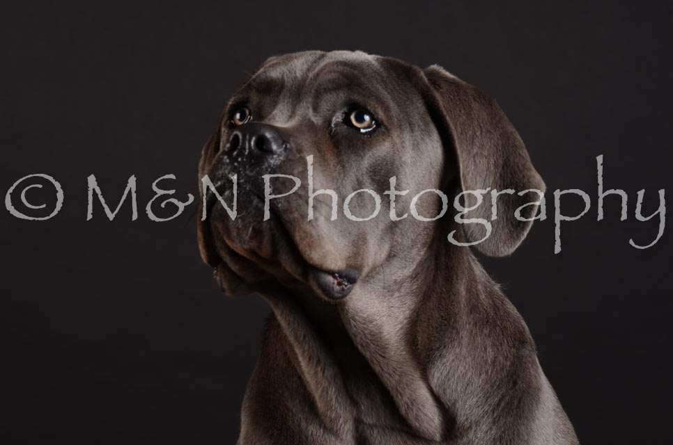 M&N Photography -DSC_5584