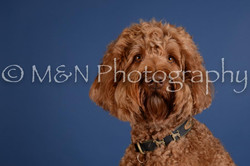 M&N Photography -DSC_4955