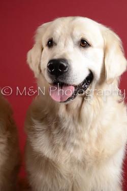 M&N Photography -DSC_3482