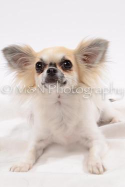 M&N Photography -DSC_9051