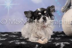 M&N Photography -DSC_6595