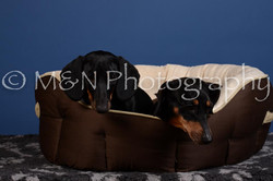 M&N Photography -DSC_5365