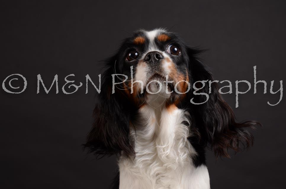 M&N Photography -DSC_5440