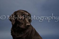 M&N Photography -DSC_4337