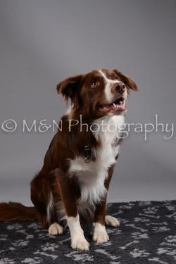 M&N Photography -DSC_1460