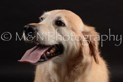 M&N Photography -DSC_9881