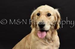 M&N Photography -DSC_2625
