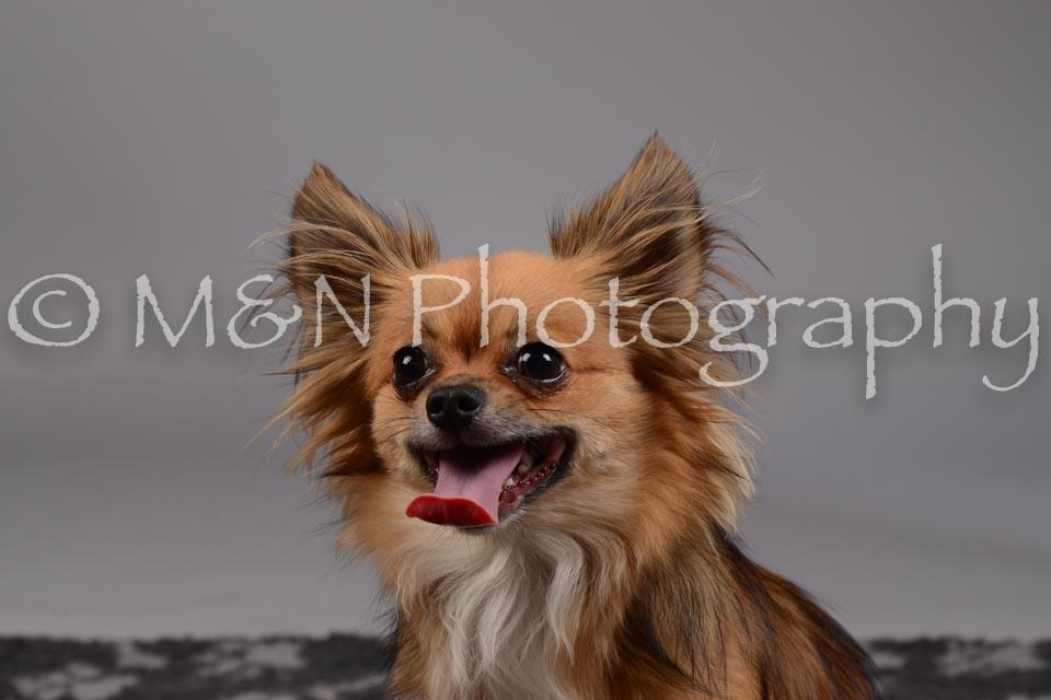 M&N Photography -DSC_1792