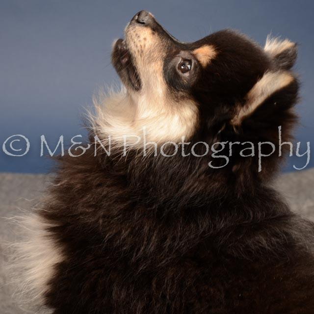 M&N Photography -DSC_4364