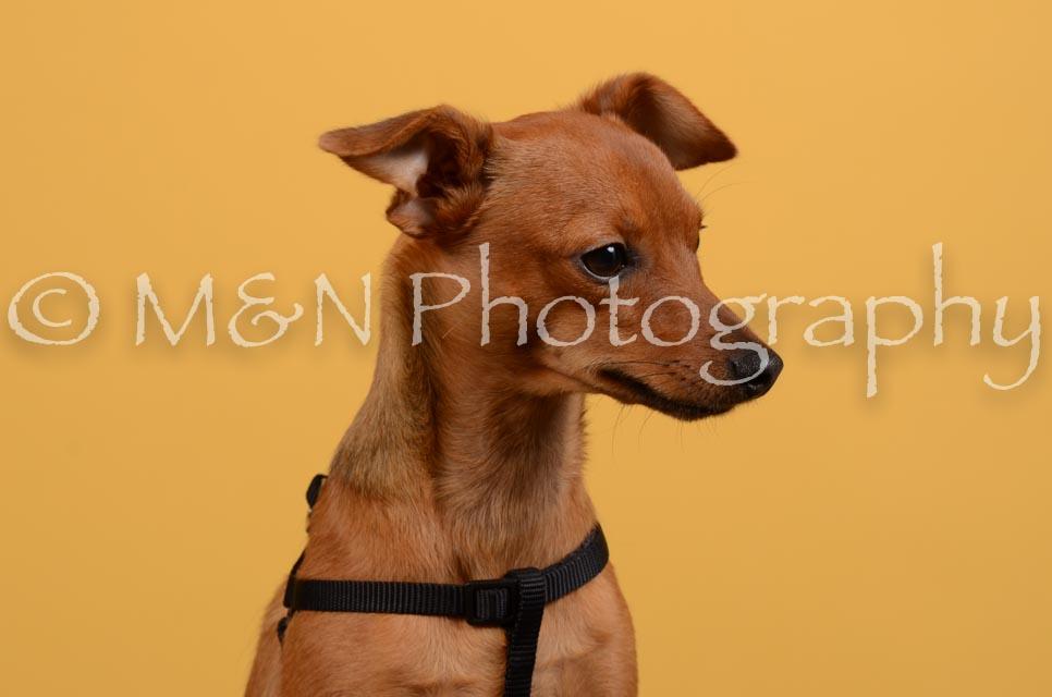 M&N Photography -DSC_4597
