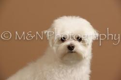 M&N Photography -_SNB0657