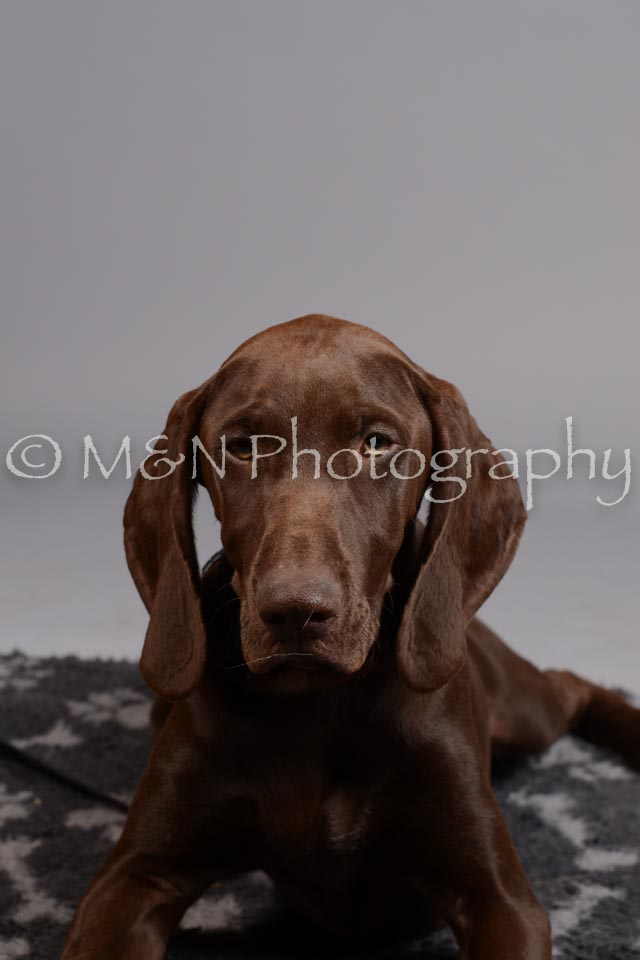 M&N Photography -DSC_2613