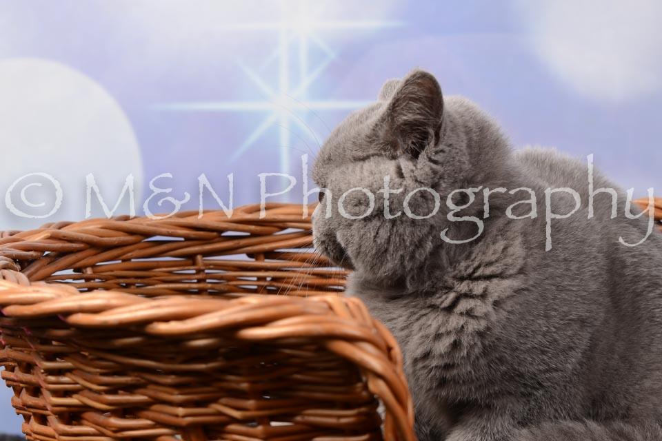 M&N Photography -DSC_7015