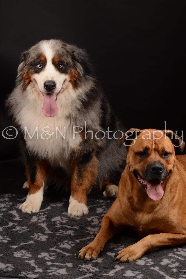 M&N Photography -DSC_0204