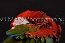 M&N Photography -DSC_2694
