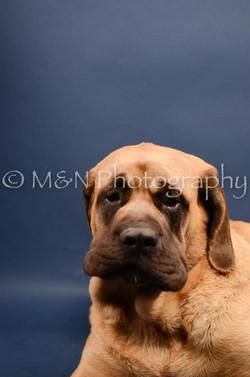 M&N Photography -DSC_3734
