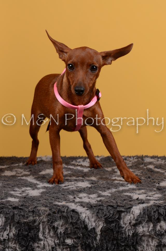 M&N Photography -DSC_4600