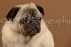 M&N Photography -_SNB0609