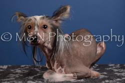 M&N Photography -DSC_5189