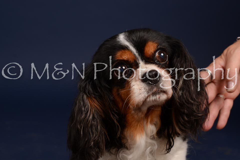 M&N Photography -DSC_0631