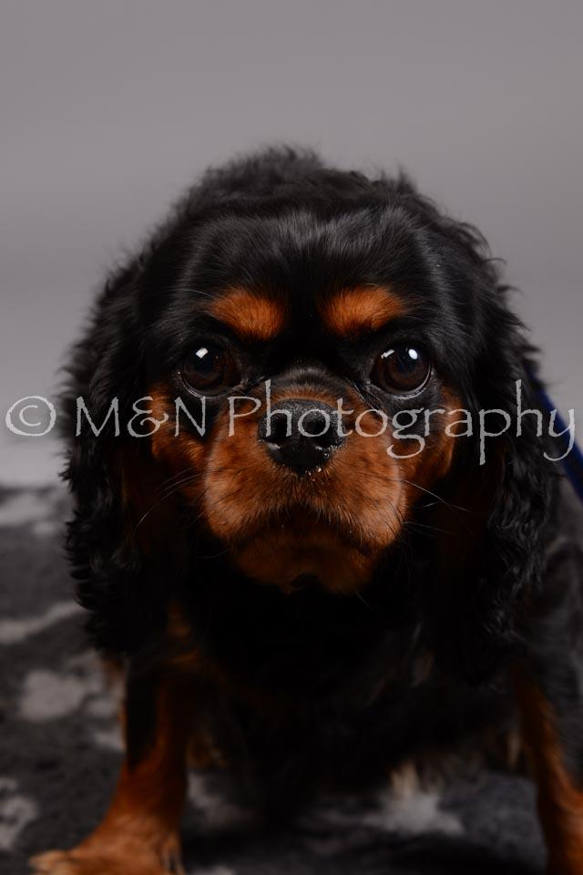 M&N Photography -DSC_2591