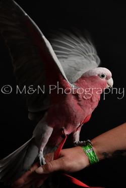 M&N Photography -DSC_2739
