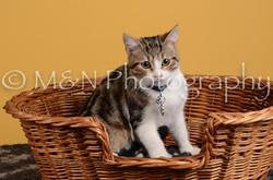 M&N Photography -DSC_4789