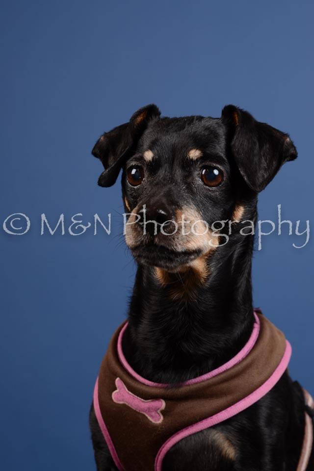 M&N Photography -DSC_5240