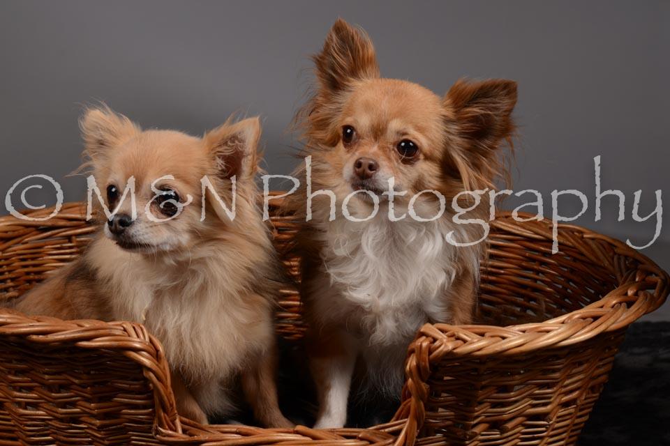 M&N Photography -DSC_1825