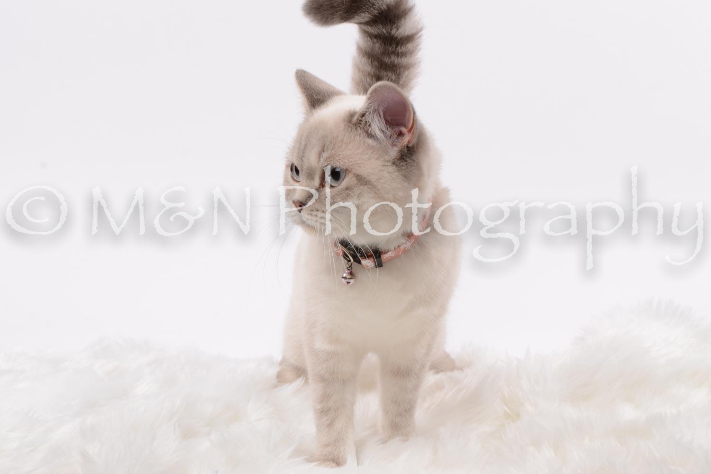 M&N Photography -DSC_8808