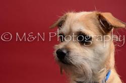 M&N Photography -DSC_8567