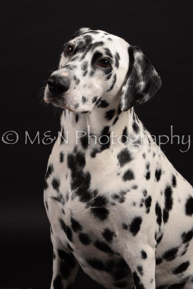 M&N Photography -DSC_9619