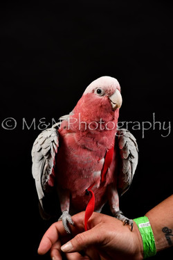 M&N Photography -DSC_2736