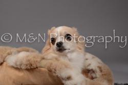 M&N Photography -DSC_1643