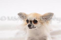 M&N Photography -DSC_9047