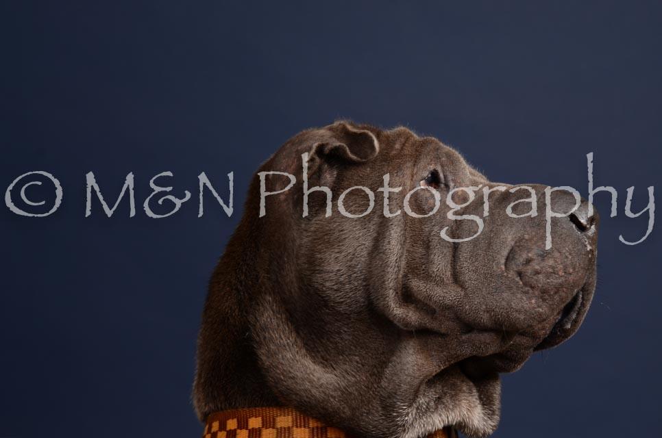 M&N Photography -DSC_0285