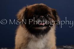M&N Photography -DSC_4144