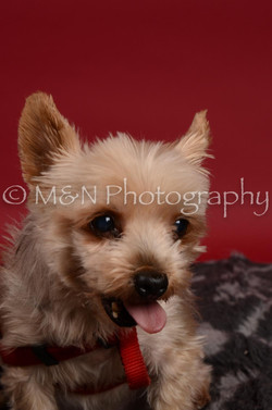 M&N Photography -DSC_8560