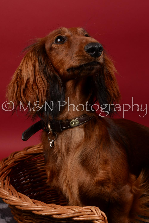 M&N Photography -DSC_8532