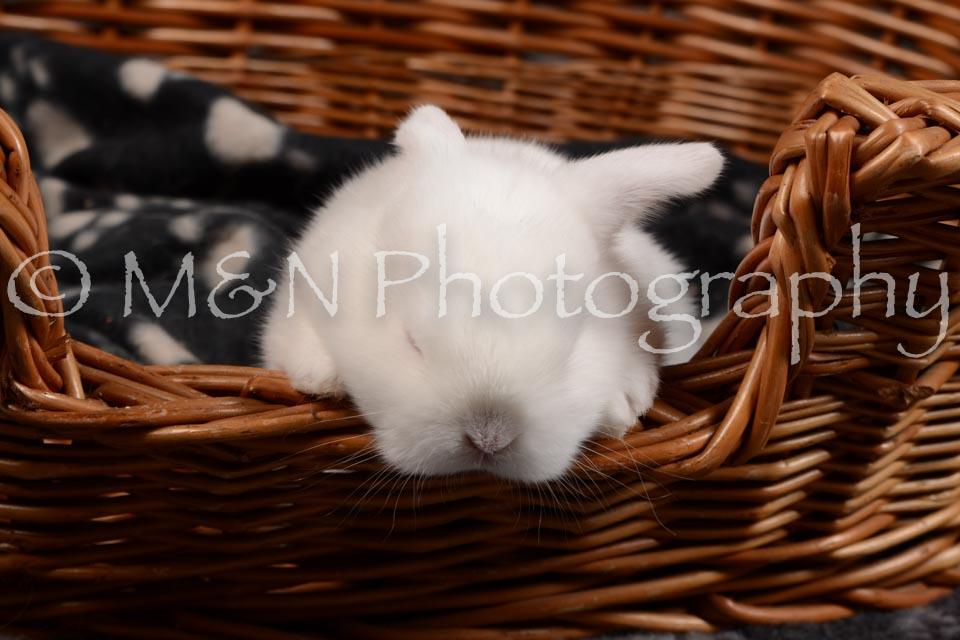 M&N Photography -DSC_1688